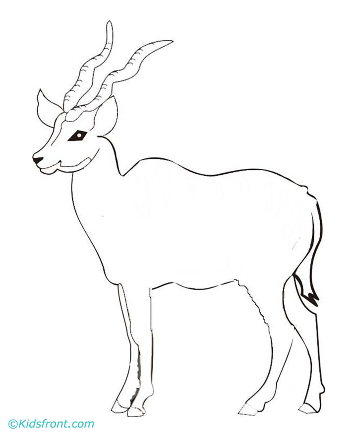 Antelope Face Drawing Coloring Pages Antelope