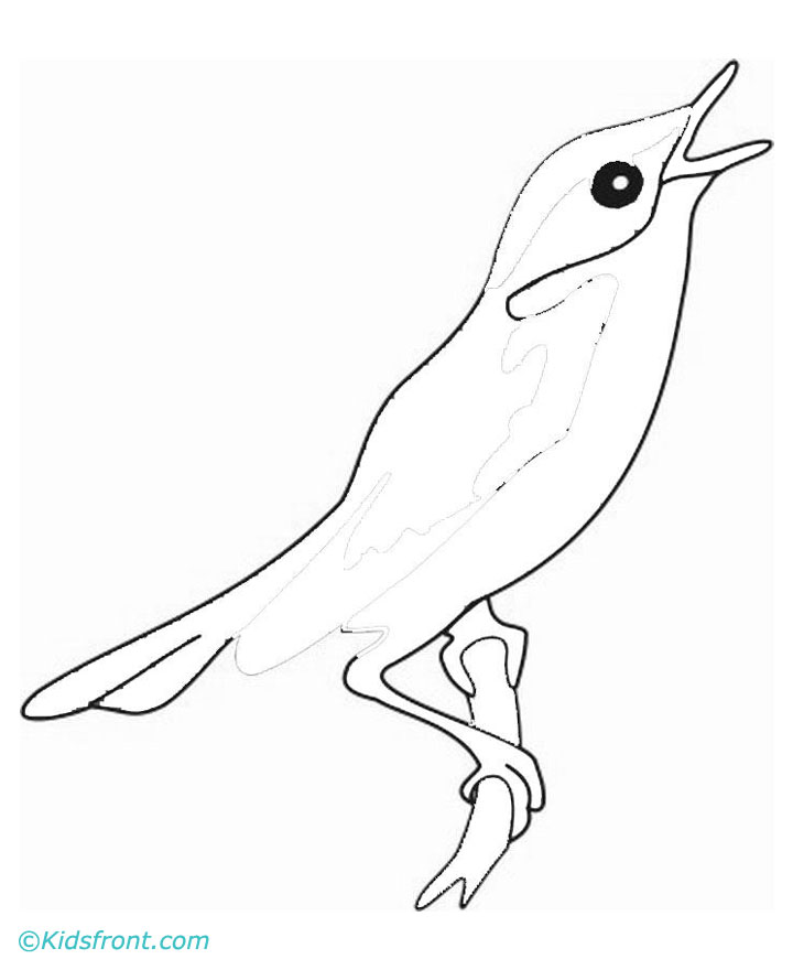 nightingale animal coloring pages. Animals Names  Birds Pet Male Female of
