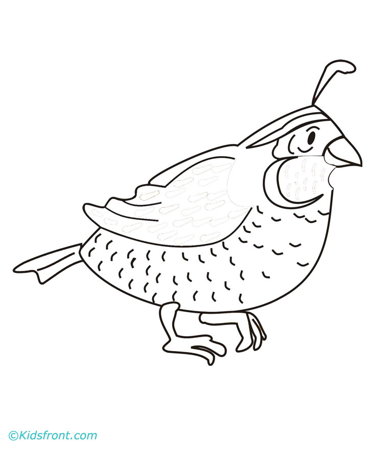Line Art Quail : Free coloring pages of copa america