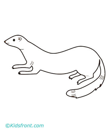 All About Ferret & Animals Coloring Page