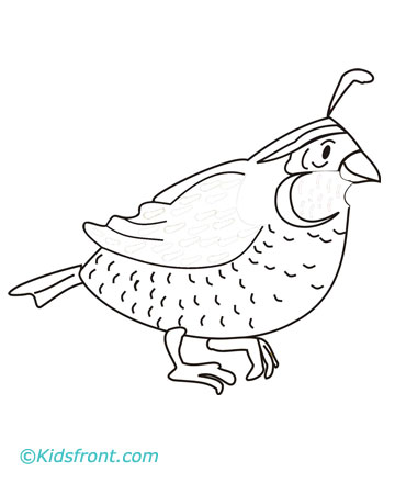 print quail coloring pages small color page large color page small b w    Quail Coloring Page