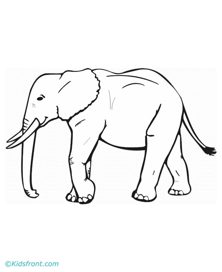 Indian Elephant Line Drawing Coloring Pages Elephant