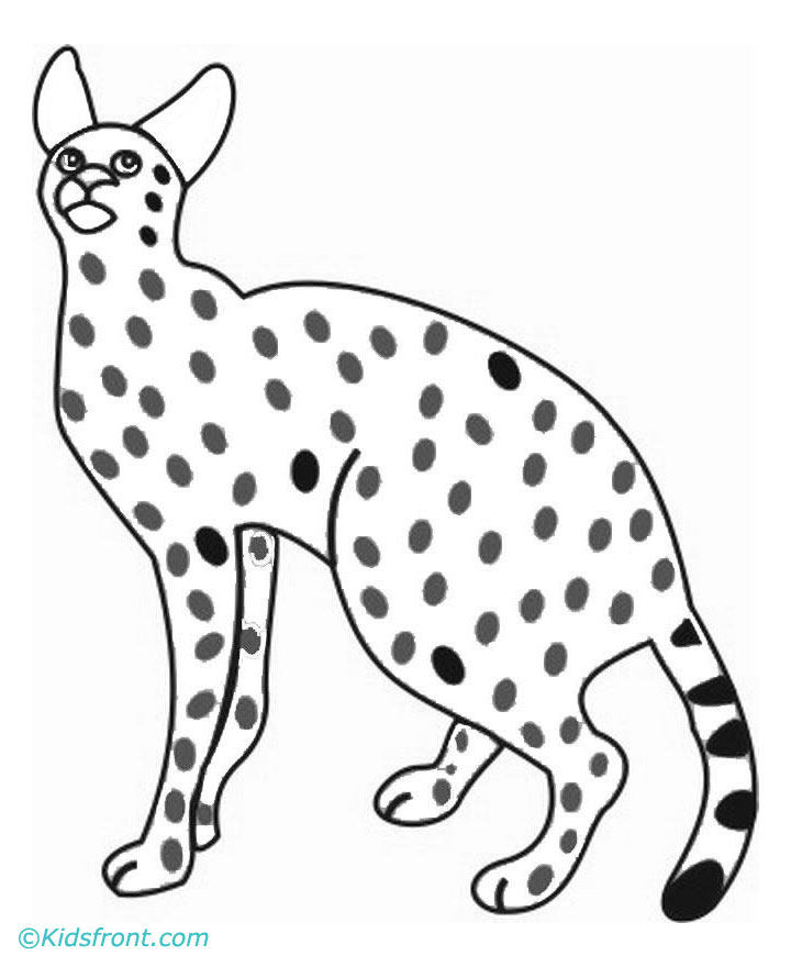 sabertooth cat coloring pages - photo#49