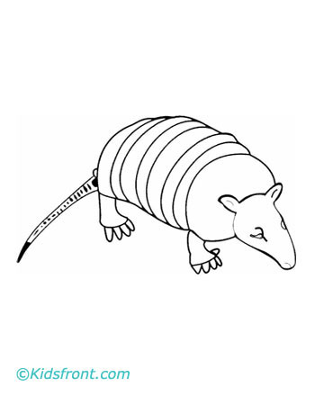 armadillo coloring pages printable