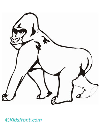 animals names birds names pet names male female names of animals birds - Silverback Gorilla Coloring Pages