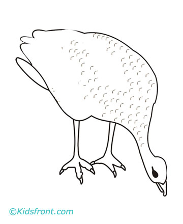 Grouse Coloring Pages For Kids