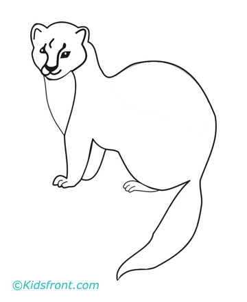 Marten Coloring Pages Printable