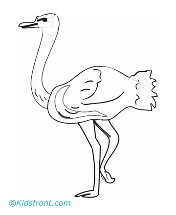 Ostrich Drawing For Kids Print Ostrich Coloring Pages