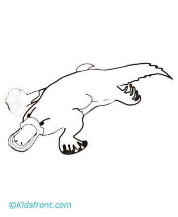 Platypus Drawing -