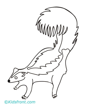 Skunk Coloring Pages For Kids