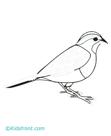 Sparrow Coloring Pages For Kids