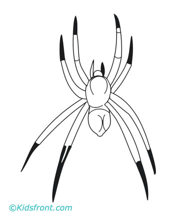 spider coloring pages for kids - Black Widow Spider Coloring Pages
